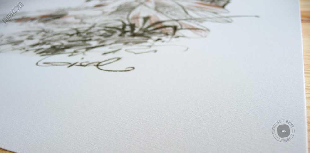 Affiche édition d'art BD Peter Pan 'Clochette, autre songe' de Régis Loisel - Illustrose